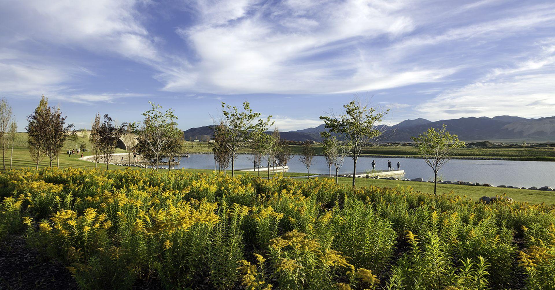 Lake Grass View